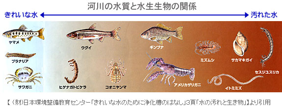 水生生物との共生